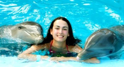 Dolphins in Pattaya
