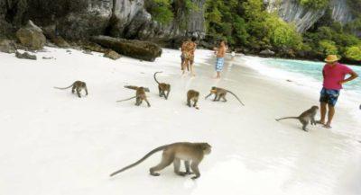 Мадагаскар Паттайя