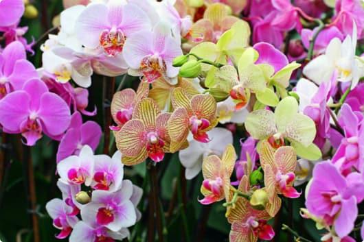 Сад орхидей и бабочек Мае Са