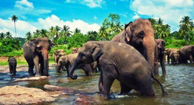 Sri Lanka from Pattaya