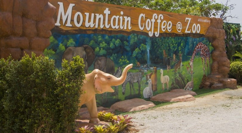 Mountain Coffee at Zoo