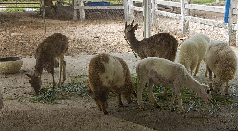 новый зоопарк в Паттайе